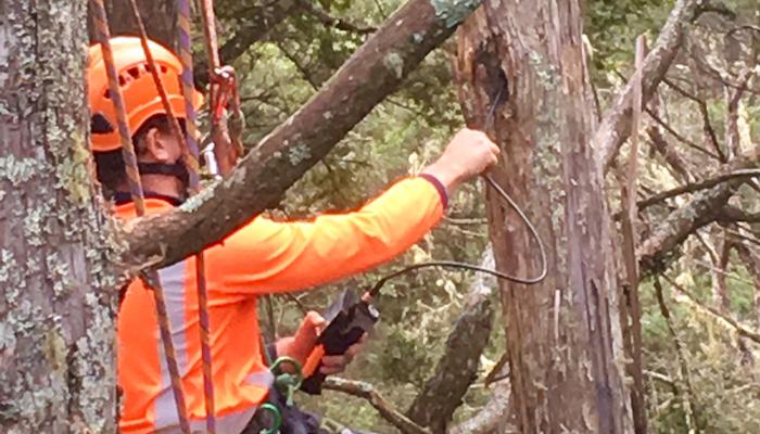 Arboricultural report