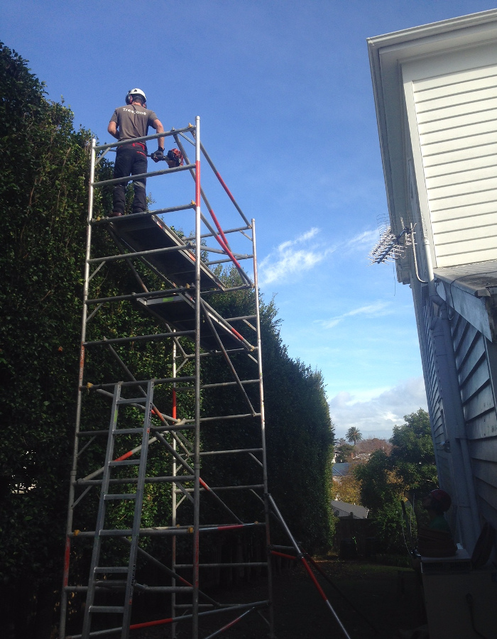Hedge Trimming Auckland