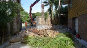 Group of Palms Removed