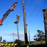 Pine Removal Auckland
