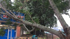 Storm Damage Tree Threatens Building