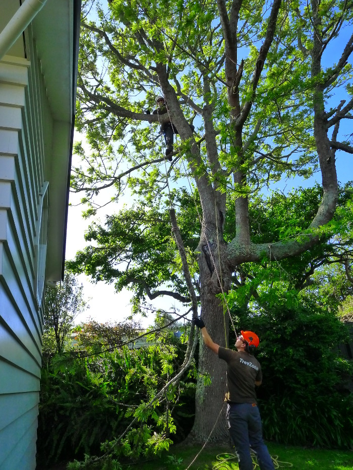 Tree prunning 1