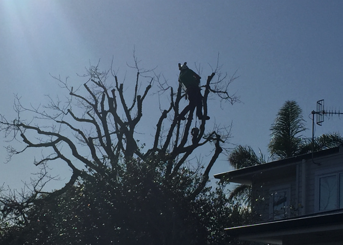 TreeZone Ltd tree topping