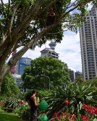 TreeZone tree services Auckland