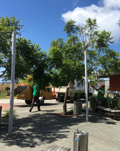 TreeZone Ltd tree services Auckland