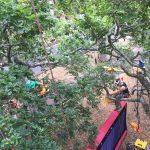 TreeZone Ltd Chinese Lantern Festival