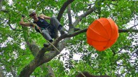 TreeZone Ltd @ the Chinese Lantern Festival