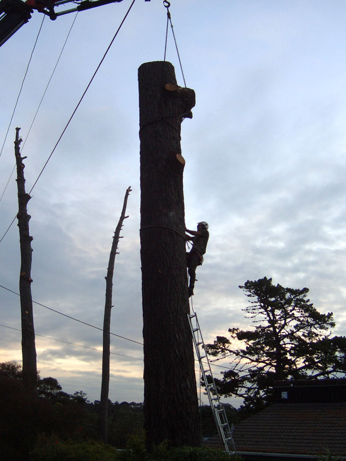 Tree Removal Auckland - TreeZone Ltd