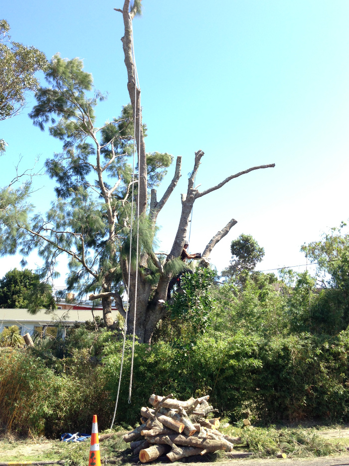 Tree Removal Auckland - TreeZone Ltd