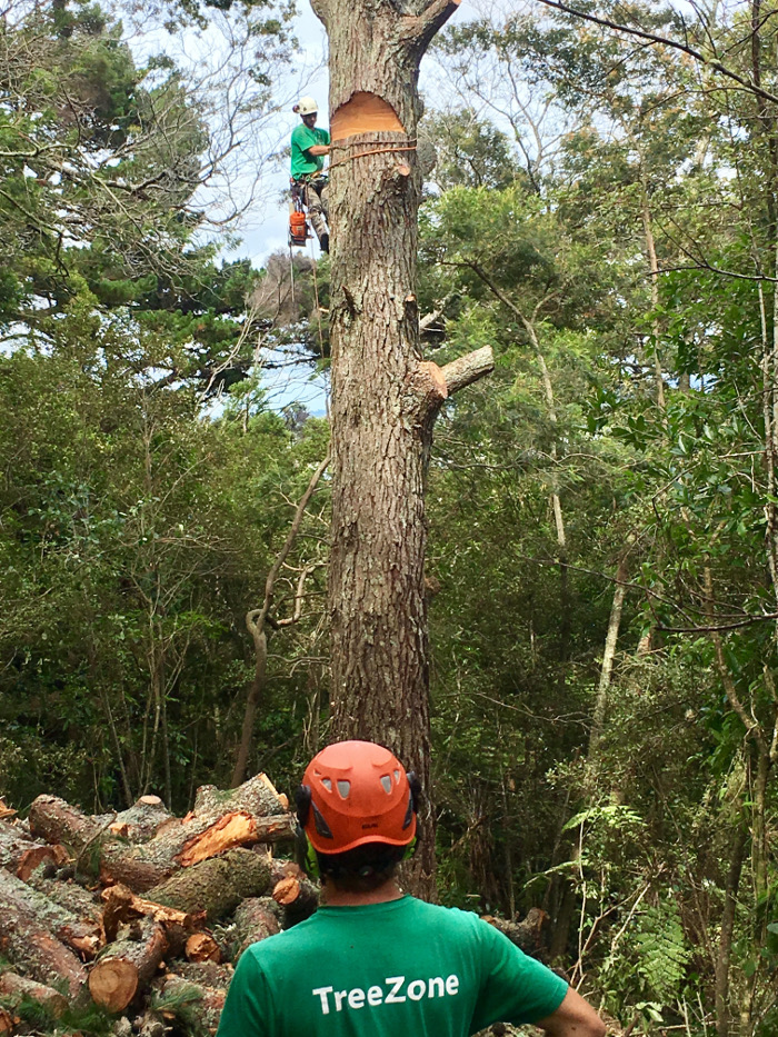 Tree Removal North Shore